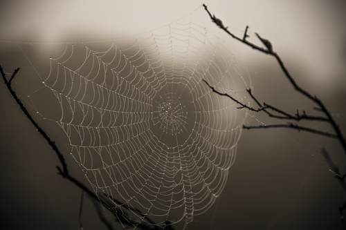 Commneting on blogs is Just like seeing a spider web with the sun glistening on it on, a foggy morning... something pretty special!