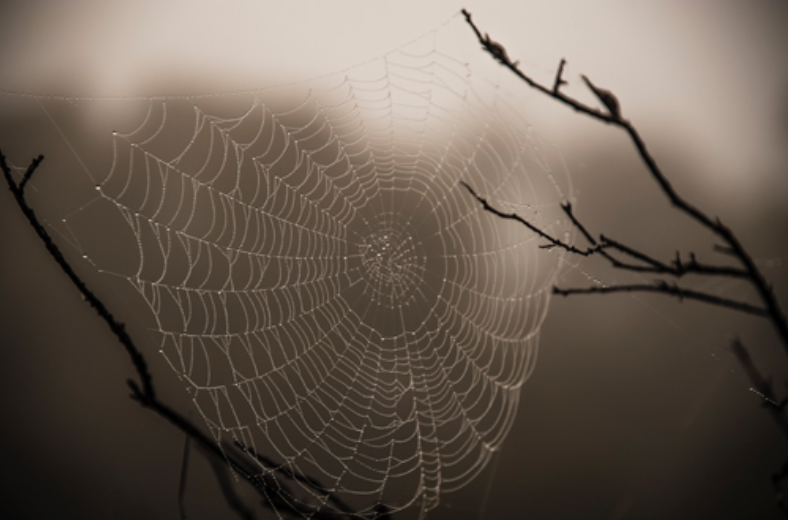 The web of life can be very fullfilling once we live from what we value