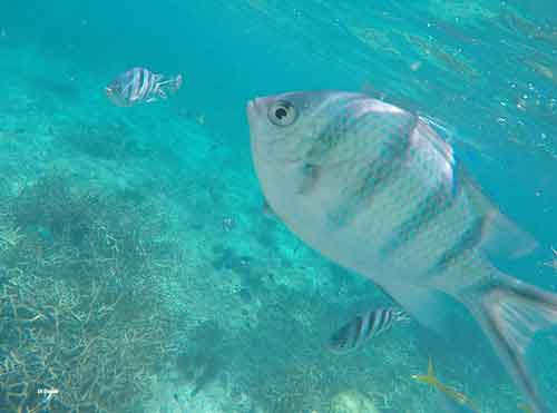 Stunning water and gorgeous varities of fish on the reefs off Tioman Island